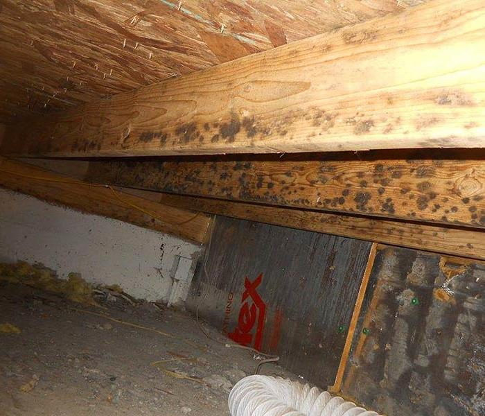 Mold Remediation Mold in Crawlspace Athens, AL.