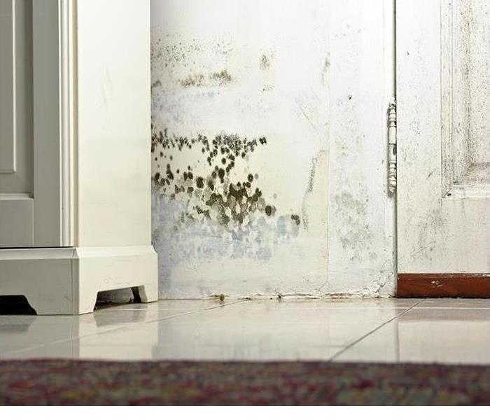 Mold Remediation Humidity and Mold
