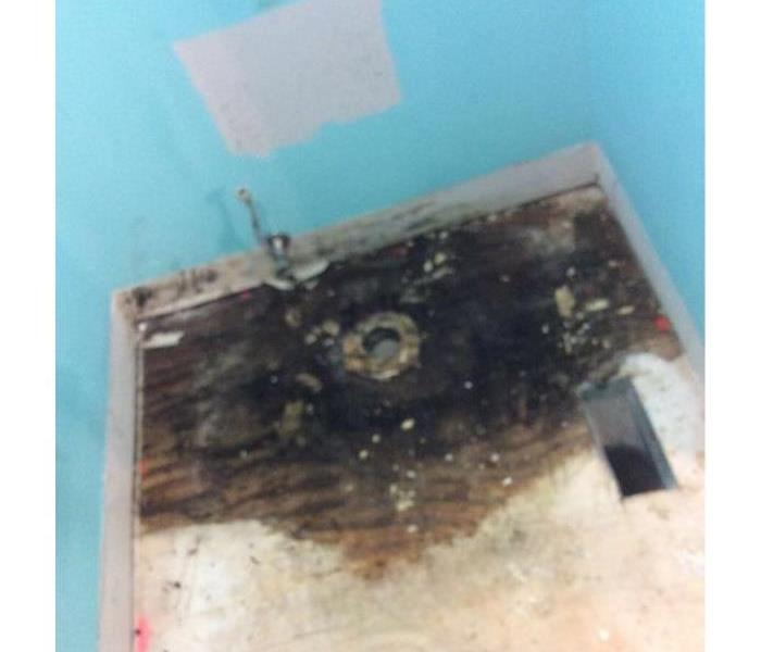 Mold Remediation Residential Mold Damage
